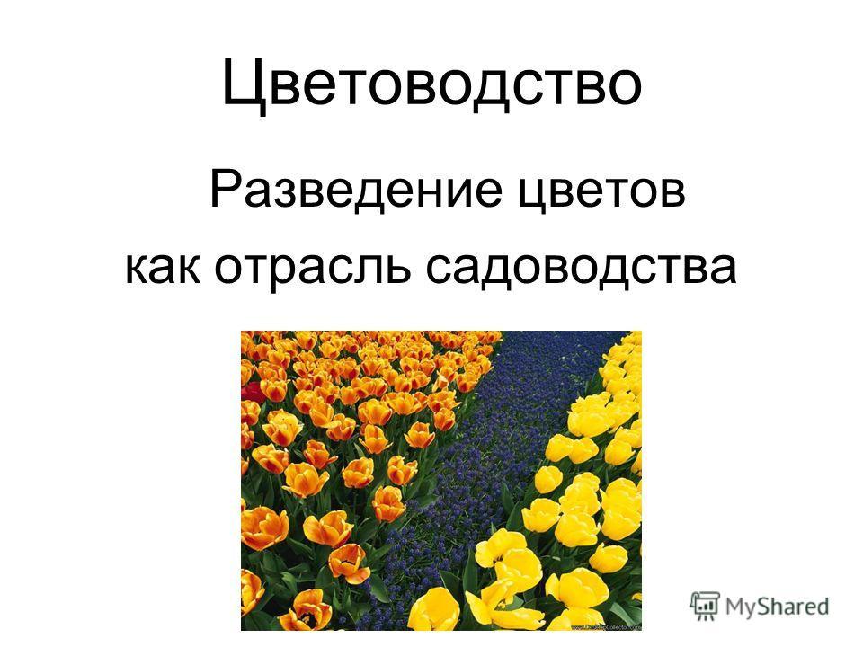 Цветоводство Разведение цветов как отрасль садоводства