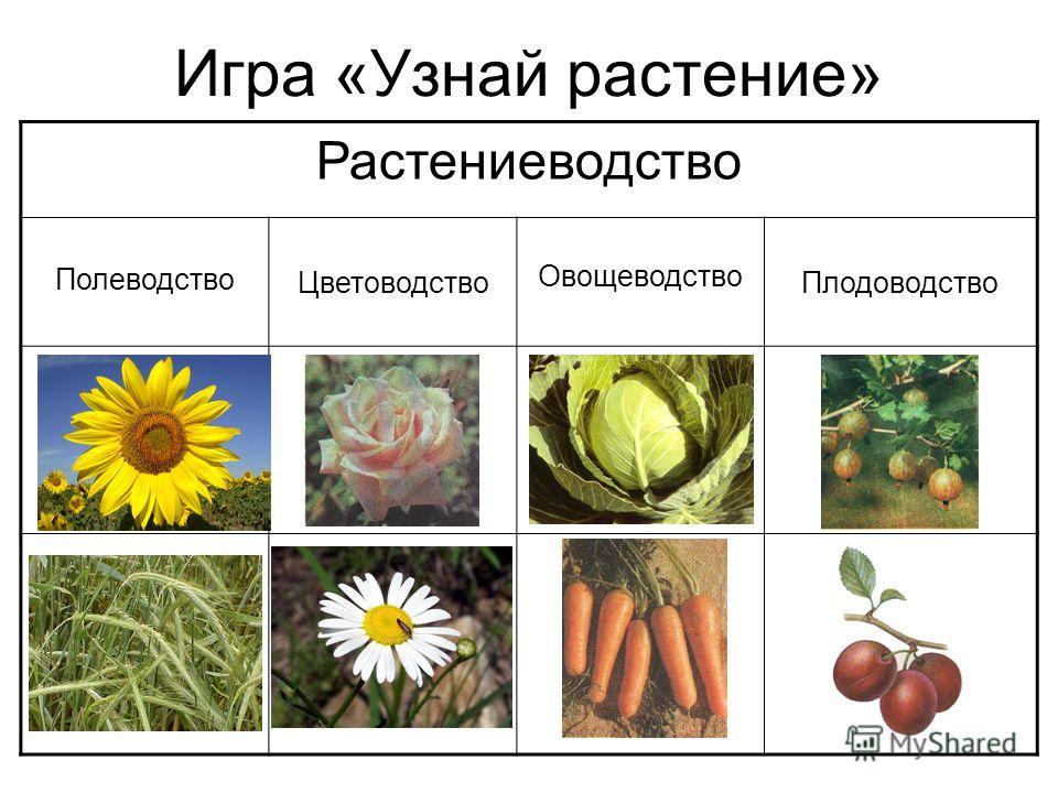 Игра «Узнай растение» Растениеводство Полеводство Цветоводство Овощеводство Плодоводство