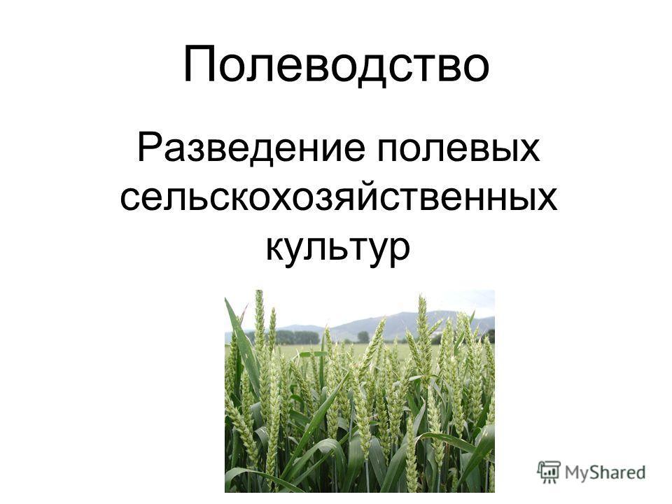 Полеводство Разведение полевых сельскохозяйственных культур