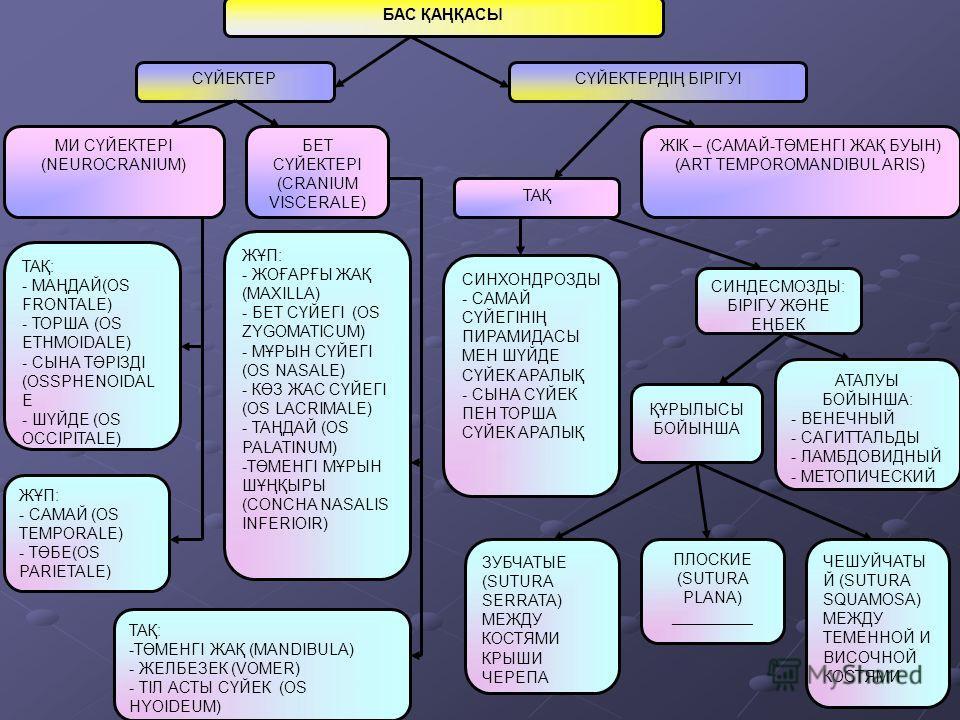 БАС ҚАҢҚАСЫ СҮЙЕКТЕРСҮЙЕКТЕРДІҢ БІРІГУІ МИ СҮЙЕКТЕРІ (NEUROCRANIUM) БЕТ СҮЙЕКТЕРІ (CRANIUM VISCERALE) ЖІК – (САМАЙ-ТӨМЕНГІ ЖАҚ БУЫН) (ART TEMPOROMANDIBUL ARIS) ТАҚ ТАҚ: - МАҢДАЙ(OS FRONTALE) - ТОРША (OS ETHMOIDALE) - СЫНА ТӘРІЗДІ (OSSPHENOIDAL E - ШҮ