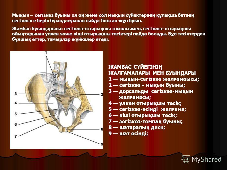 ЖАМБАС СҮЙЕГІНІҢ ЖАЛҒАМАЛАРЫ МЕН БУЫНДАРЫ 1 мықын-сегізкөз жалғамаысы; 2 сегізкөз - мықын буыны; 3 дорсальды сегізкөз-мықын жалғамасы; 4 үлкен отырықшы тесік; 5 сегізкөз-өсінді жалғама; 6 кіші отырықшы тесік; 7 зегізкөз-томпақ буыны; 8 шатаралық диск