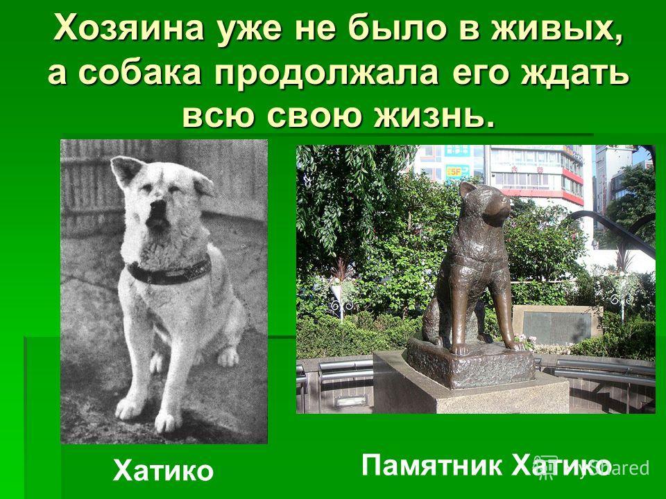 Хозяина уже не было в живых, а собака продолжала его ждать всю свою жизнь. Хатико Памятник Хатико
