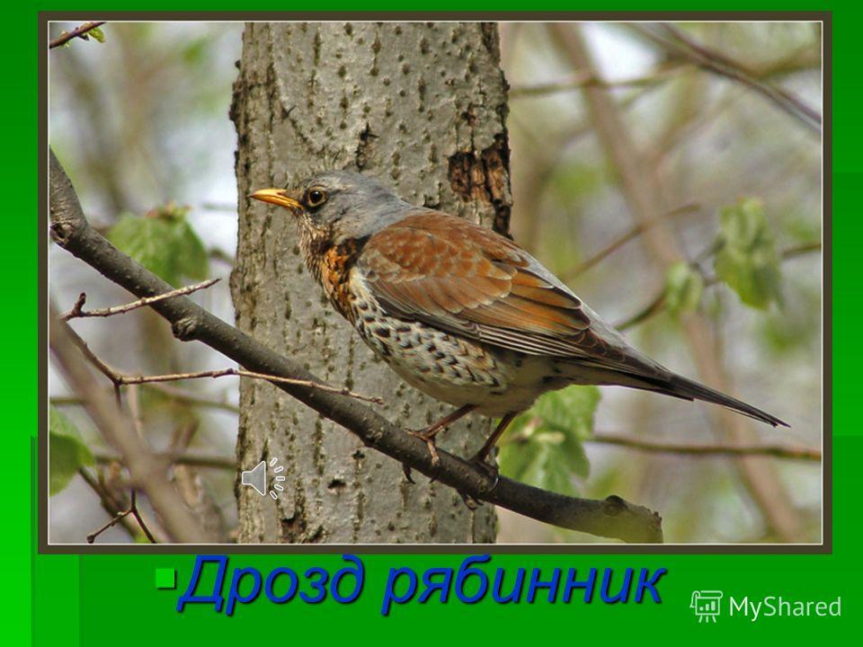 Так поют птицы.