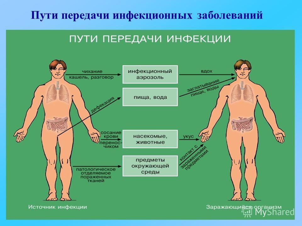 Пути передачи инфекционных заболеваний