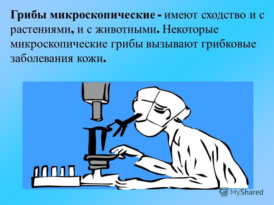 Грибы м икроскопические - и меют с ходство и с растениями, и с ж ивотными. Н екоторые микроскопические г рибы в ызывают г рибковые заболевания к ожи.