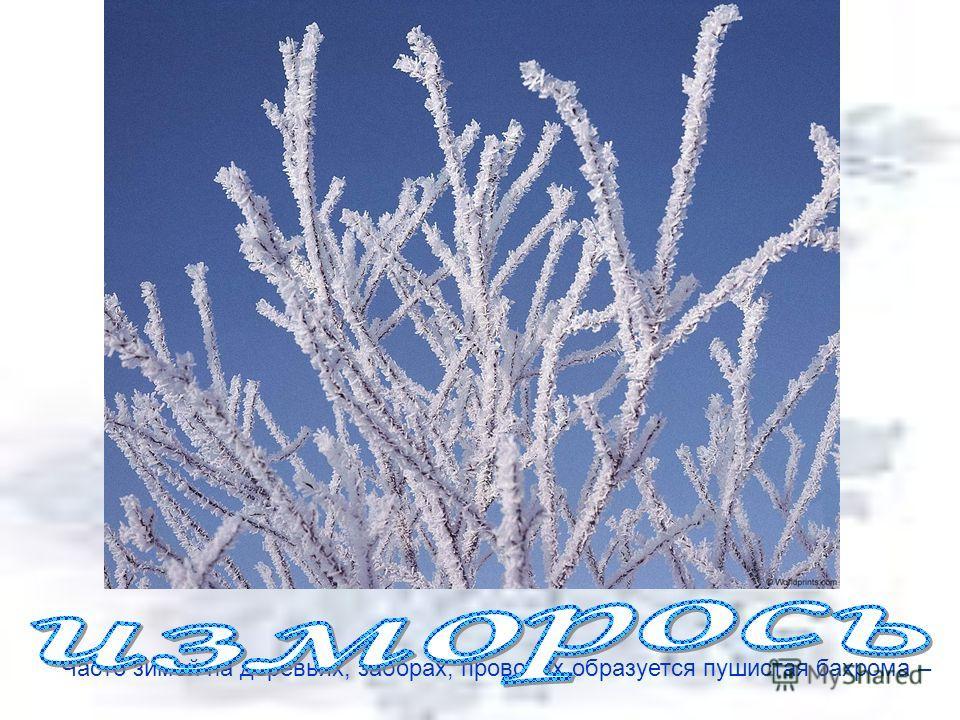 Часто зимой на деревьях, заборах, проводах образуется пушистая бахрома –