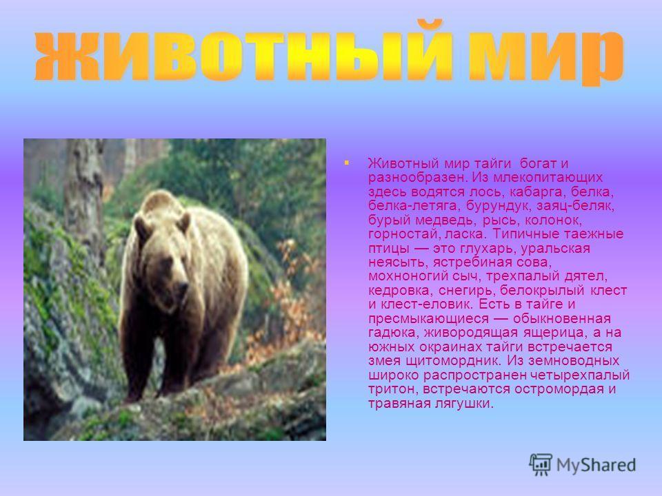 Животный мир тайги богат и разнообразен. Из млекопитающих здесь водятся лось, кабарга, белка, белка-летяга, бурундук, заяц-беляк, бурый медведь, рысь, колонок, горностай, ласка. Типичные таежные птицы это глухарь, уральская неясыть, ястребиная сова,