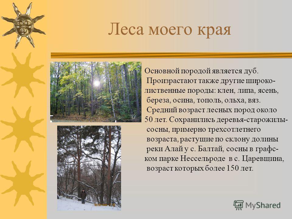 Леса моего края Основной породой является дуб. Произрастают также другие широко- лиственные породы: клен, липа, ясень, береза, осина, тополь, ольха, вяз. Средний возраст лесных пород около 50 лет. Сохранились деревья-старожилы- сосны, примерно трехсо