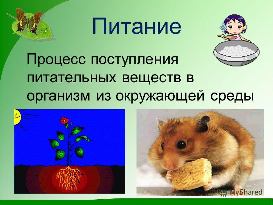 Питание Процесс поступления питательных веществ в организм из окружающей среды