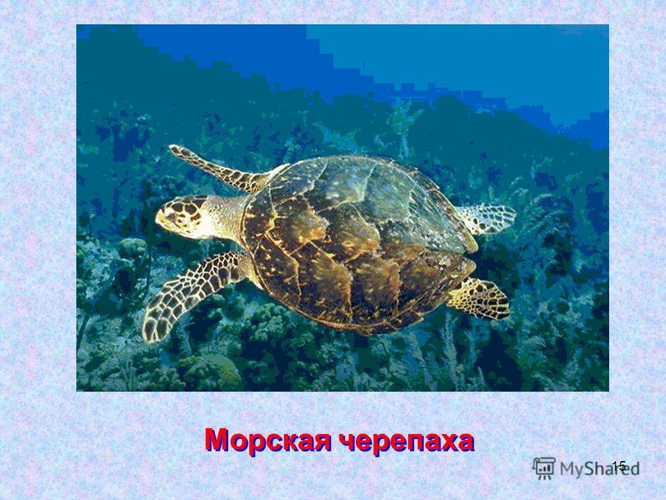 15 Морская черепаха