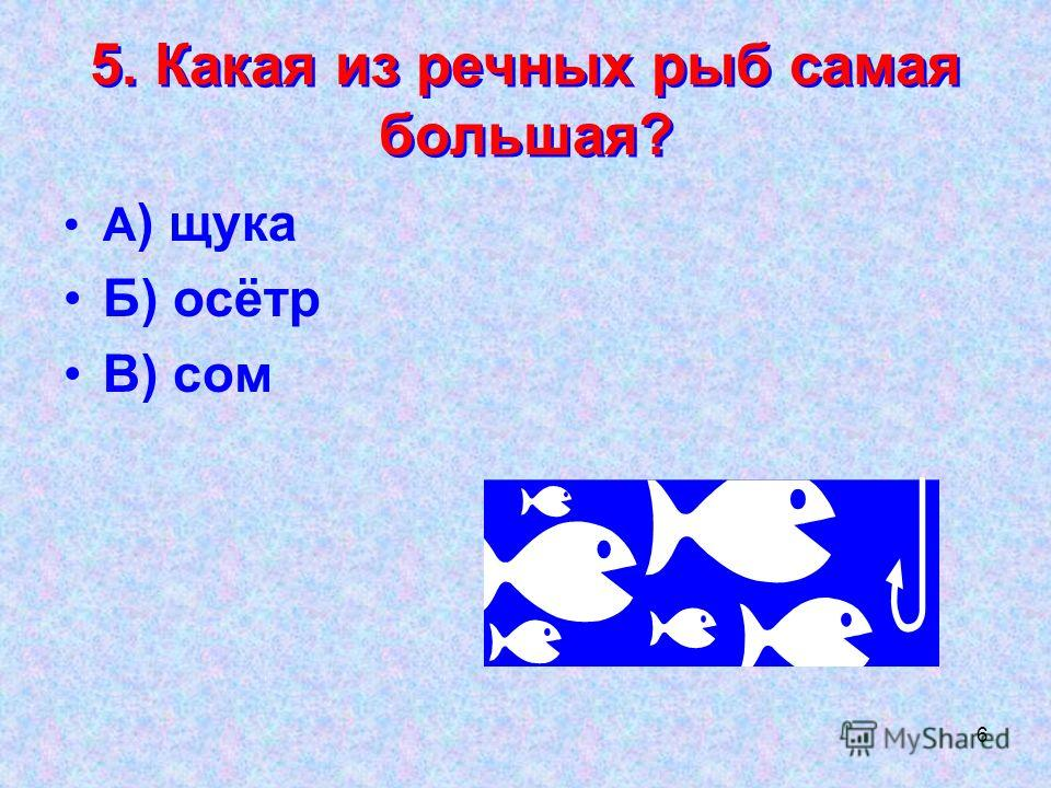 6 5. Какая из речных рыб самая большая? А ) щука Б) осётр В) сом