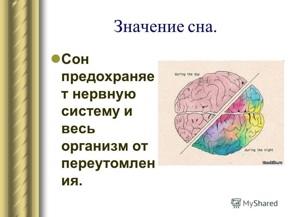Значение сна. Сон предохраняе т нервную систему и весь организм от переутомлен ия.