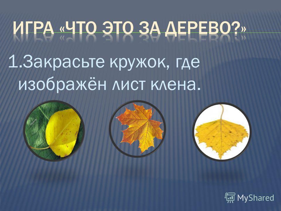 1.Закрасьте кружок, где изображён лист клена.