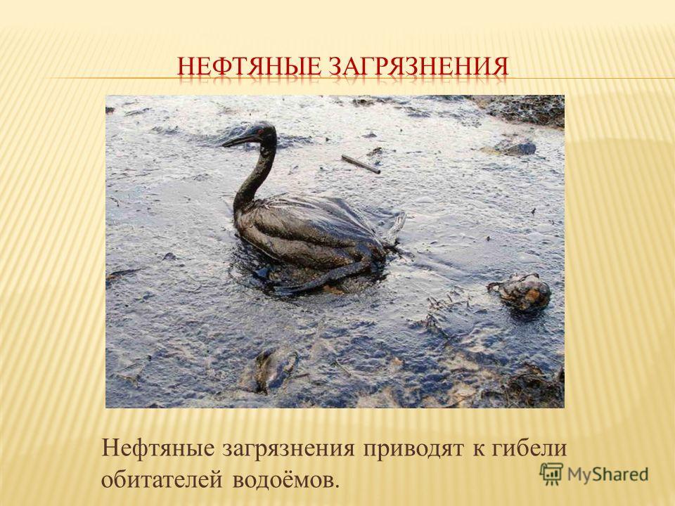 Нефтяные загрязнения приводят к гибели обитателей водоёмов.