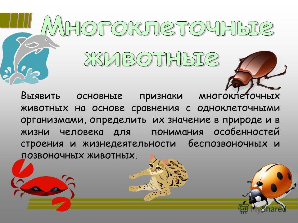 Выявить основные признаки многоклеточных животных на основе сравнения с одноклеточными организмами, определить их значение в природе и в жизни человека для понимания особенностей строения и жизнедеятельности беспозвоночных и позвоночных животных.