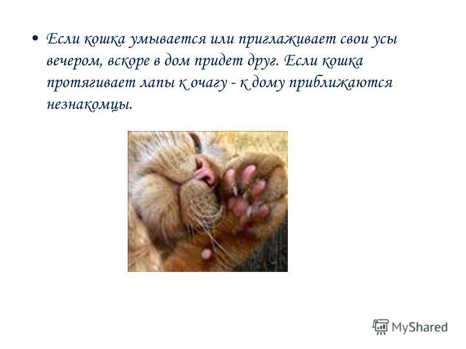 Если кошка умывается или приглаживает свои усы вечером, вскоре в дом придет друг. Если кошка протягивает лапы к очагу - к дому приближаются незнакомцы.
