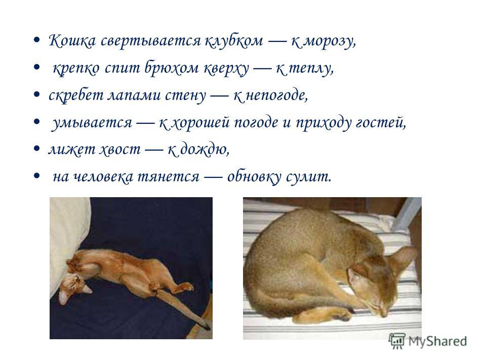 Кошка свертывается клубком к морозу, крепко спит брюхом кверху к теплу, скребет лапами стену к непогоде, умывается к хорошей погоде и приходу гостей, лижет хвост к дождю, на человека тянется обновку сулит.