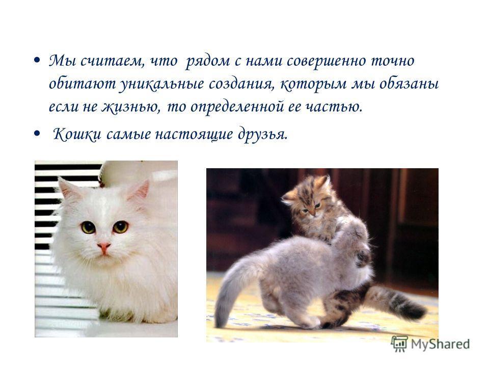 Мы считаем, что рядом с нами совершенно точно обитают уникальные создания, которым мы обязаны если не жизнью, то определенной ее частью. Кошки самые настоящие друзья.