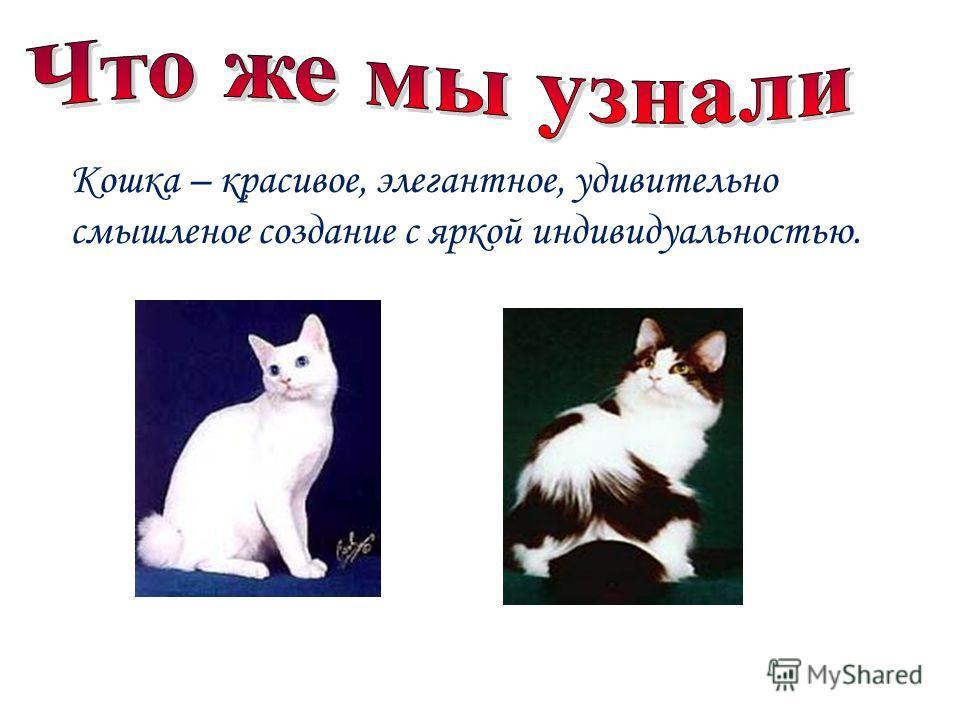 Кошка – красивое, элегантное, удивительно смышленое создание с яркой индивидуальностью.