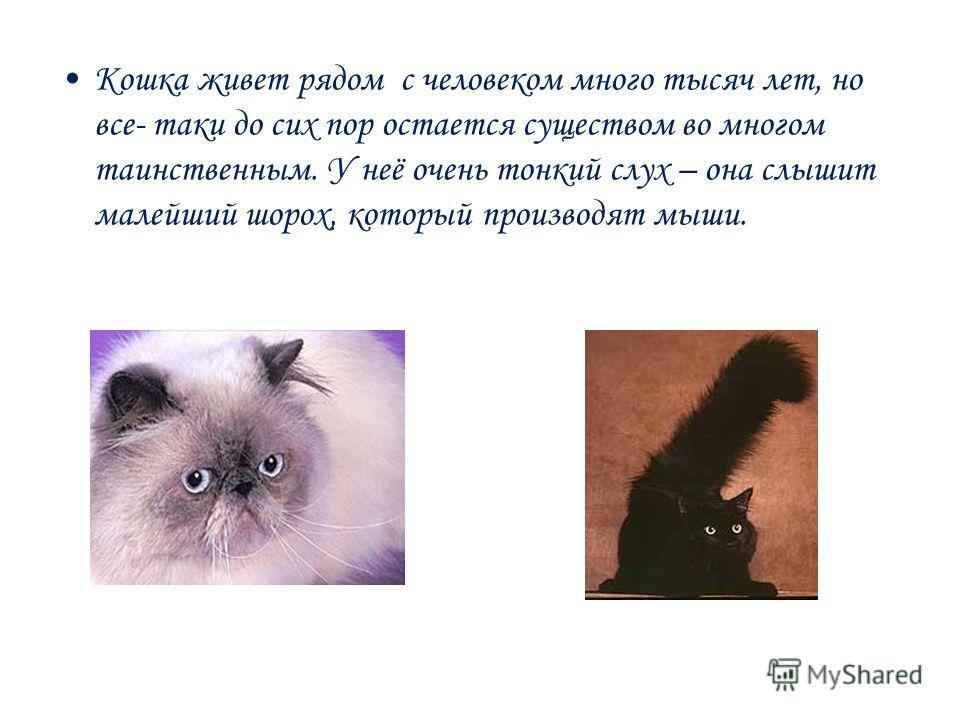 Кошка живет рядом с человеком много тысяч лет, но все- таки до сих пор остается существом во многом таинственным. У неё очень тонкий слух – она слышит малейший шорох, который производят мыши.