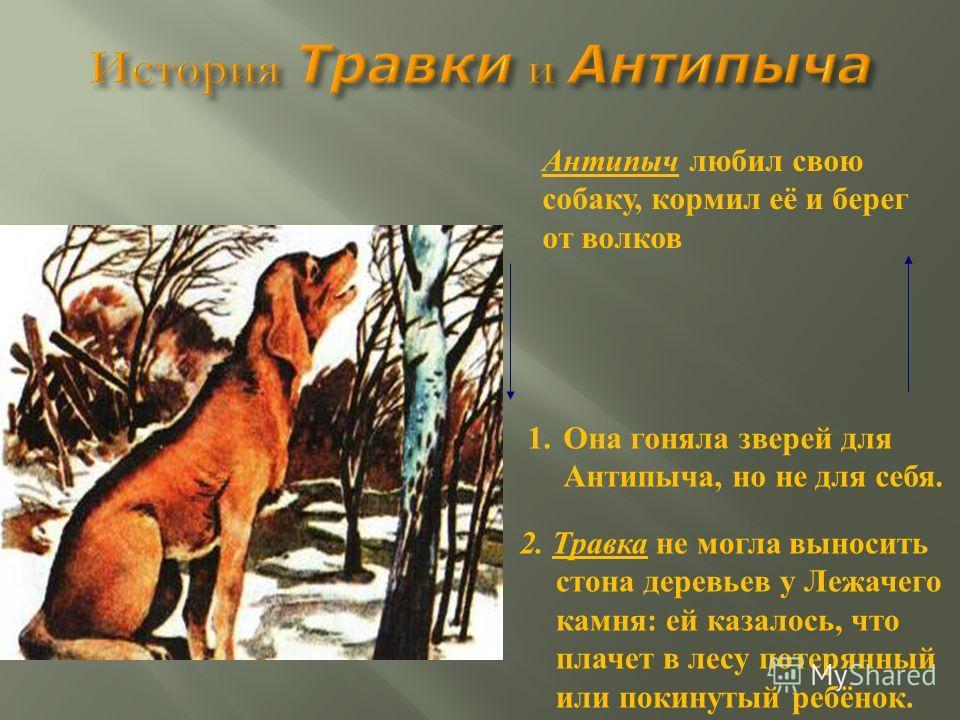 Антипыч любил свою собаку, кормил её и берег от волков 1.Она гоняла зверей для Антипыча, но не для себя. 2. Травка не могла выносить стона деревьев у Лежачего камня: ей казалось, что плачет в лесу потерянный или покинутый ребёнок.