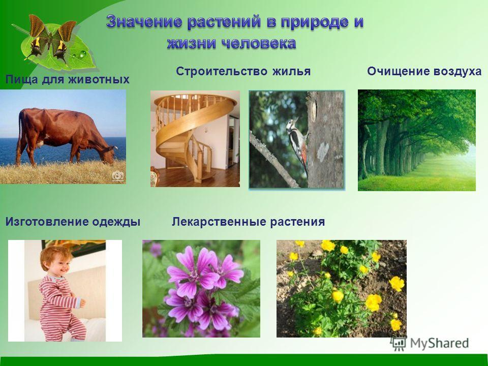 Пища для животных Строительство жильяОчищение воздуха Изготовление одеждыЛекарственные растения