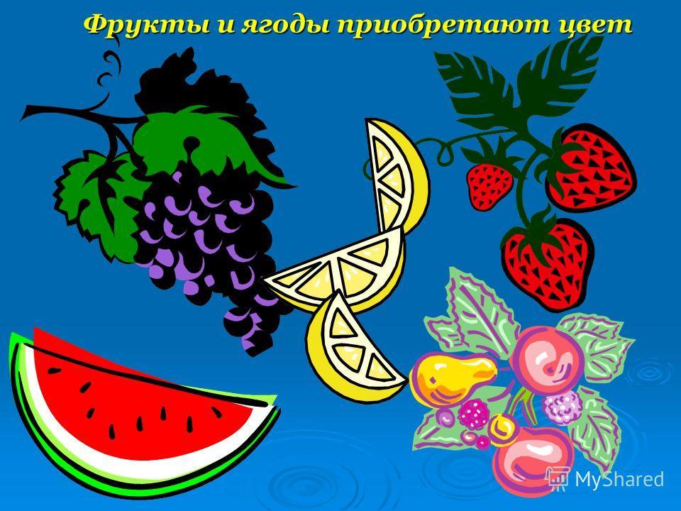 Фрукты и ягоды приобретают цвет