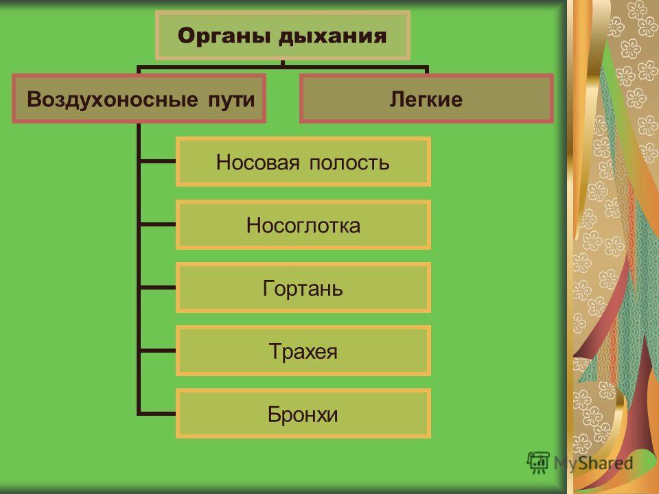 7 Органы дыхания Воздухоносные пути Носовая полость Носоглотка Гортань Трахея Бронхи Легкие