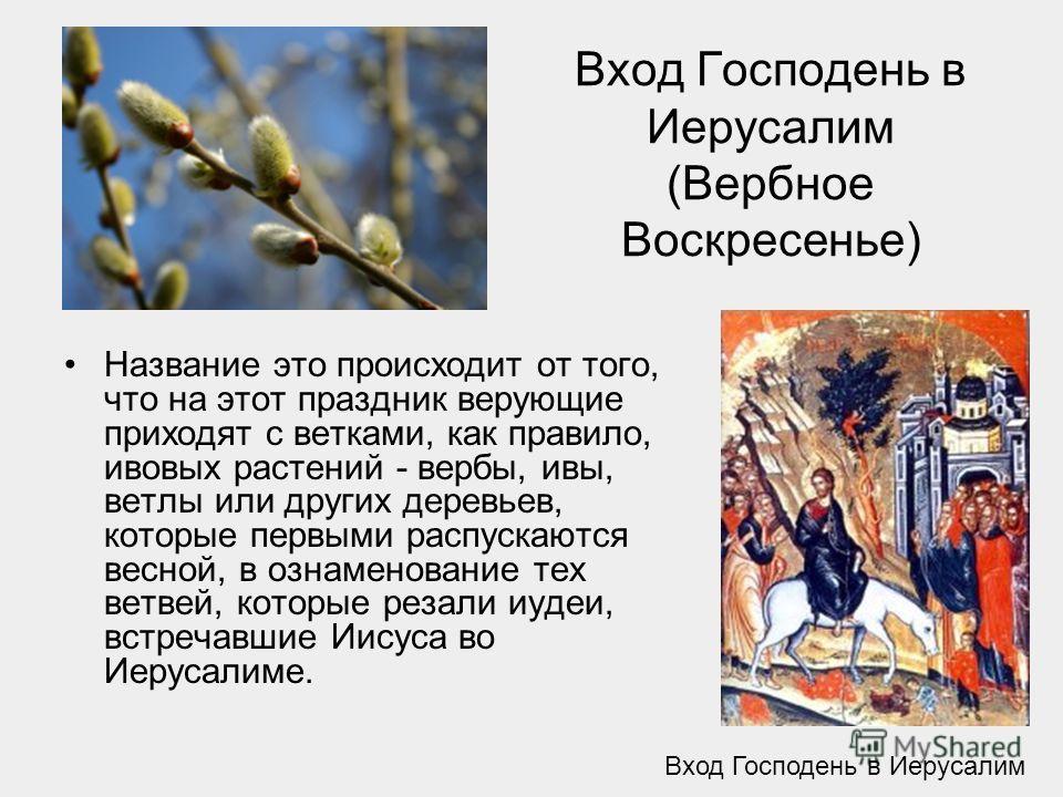 Вход Господень в Иерусалим (Вербное Воскресенье) Название это происходит от того, что на этот праздник верующие приходят с ветками, как правило, ивовых растений - вербы, ивы, ветлы или других деревьев, которые первыми распускаются весной, в ознаменов