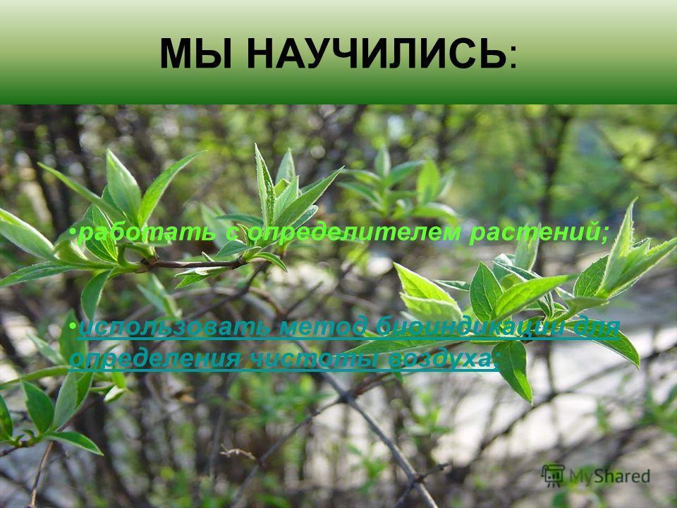 МЫ НАУЧИЛИСЬ: работать с определителем растений; использовать метод биоиндикации для определения чистоты воздуха;использовать метод биоиндикации для определения чистоты воздуха;