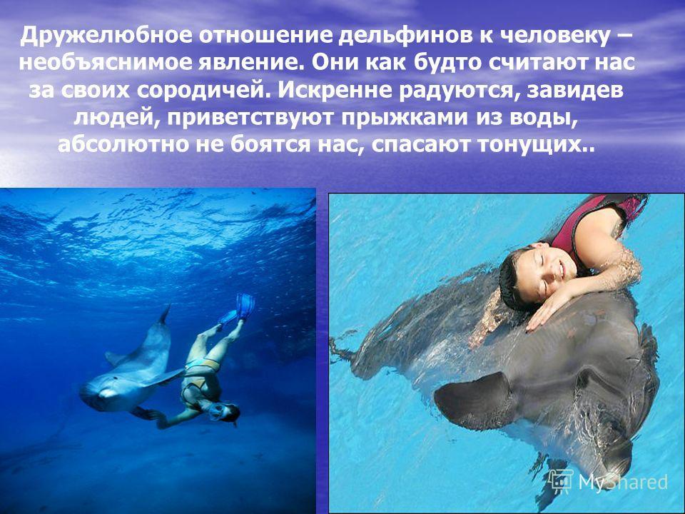 Дружелюбное отношение дельфинов к человеку – необъяснимое явление. Они как будто считают нас за своих сородичей. Искренне радуются, завидев людей, приветствуют прыжками из воды, абсолютно не боятся нас, спасают тонущих..