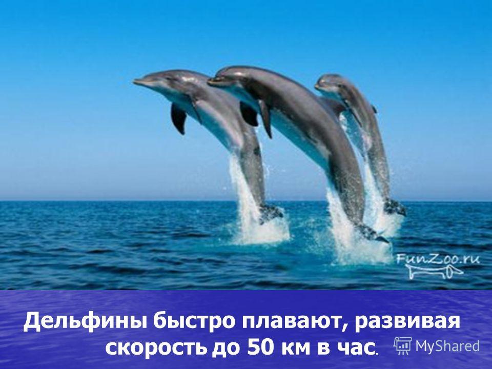 Дельфины быстро плавают, развивая скорость до 50 км в час.