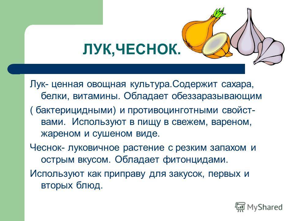 ЛУК,ЧЕСНОК. Лук- ценная овощная культура.Содержит сахара, белки, витамины. Обладает обеззаразывающим ( бактерицидными) и противоцинготными свойст- вами. Используют в пищу в свежем, вареном, жареном и сушеном виде. Чеснок- луковичное растение с резким