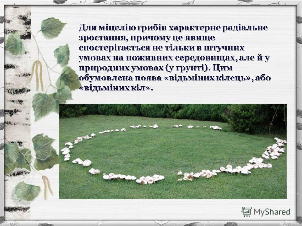 Для міцелію грибів характерне радіальне зростання, причому це явище спостерігається не тільки в штучних умовах на поживних середовищах, але й у природних умовах (у грунті). Цим обумовлена поява «відьміних кілець», або «відьміних кіл».