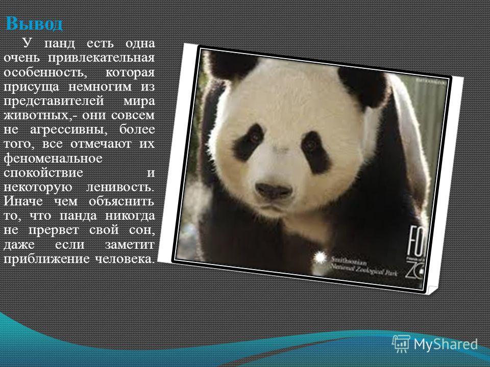 Вывод У панд есть одна очень привлекательная особенность, которая присуща немногим из представителей мира животных,- они совсем не агрессивны, более того, все отмечают их феноменальное спокойствие и некоторую ленивость. Иначе чем объяснить то, что па