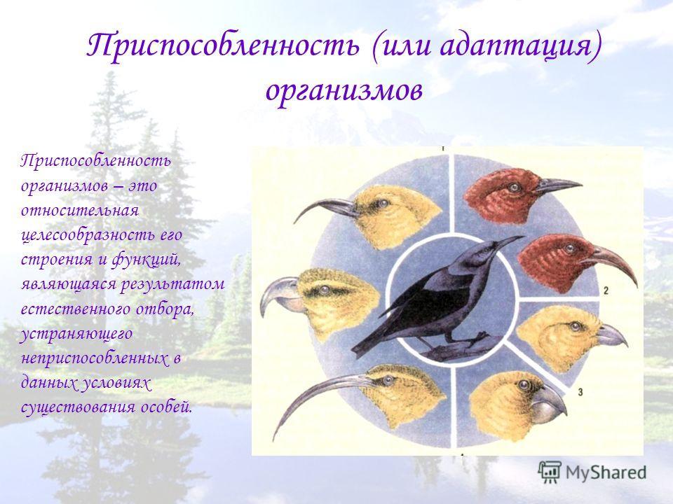 Приспособленность (или адаптация) организмов Приспособленность организмов – это относительная целесообразность его строения и функций, являющаяся результатом естественного отбора, устраняющего неприспособленных в данных условиях существования особей.