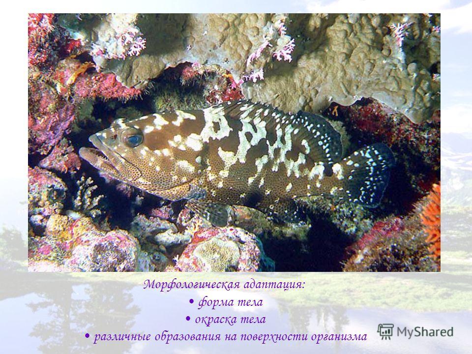 Морфологическая адаптация: форма тела окраска тела различные образования на поверхности организма