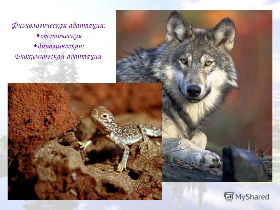 Физиологическая адаптация: статическая динамическая; Биохимическая адаптация