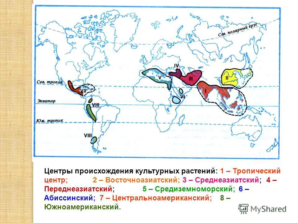 Центры происхождения культурных растений: 1 – Тропический центр; 2 – Восточноазиатский; 3 – Среднеазиатский; 4 – Переднеазиатский; 5 – Средиземноморский; 6 – Абиссинский; 7 – Центральноамериканский; 8 – Южноамериканский.