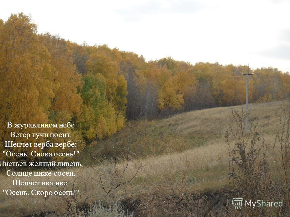 В журавлином небе Ветер тучи носит. Шепчет верба вербе: Осень. Снова осень! Листьев желтый ливень, Солнце ниже сосен. Шепчет ива иве: Осень. Скоро осень !