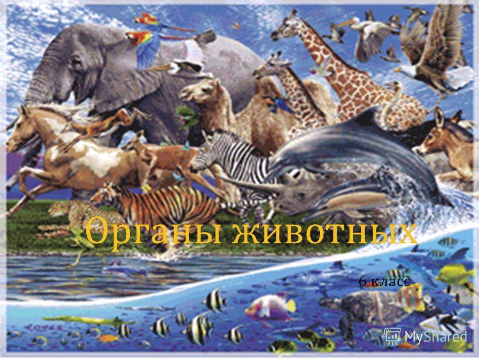Органы животных 6 класс