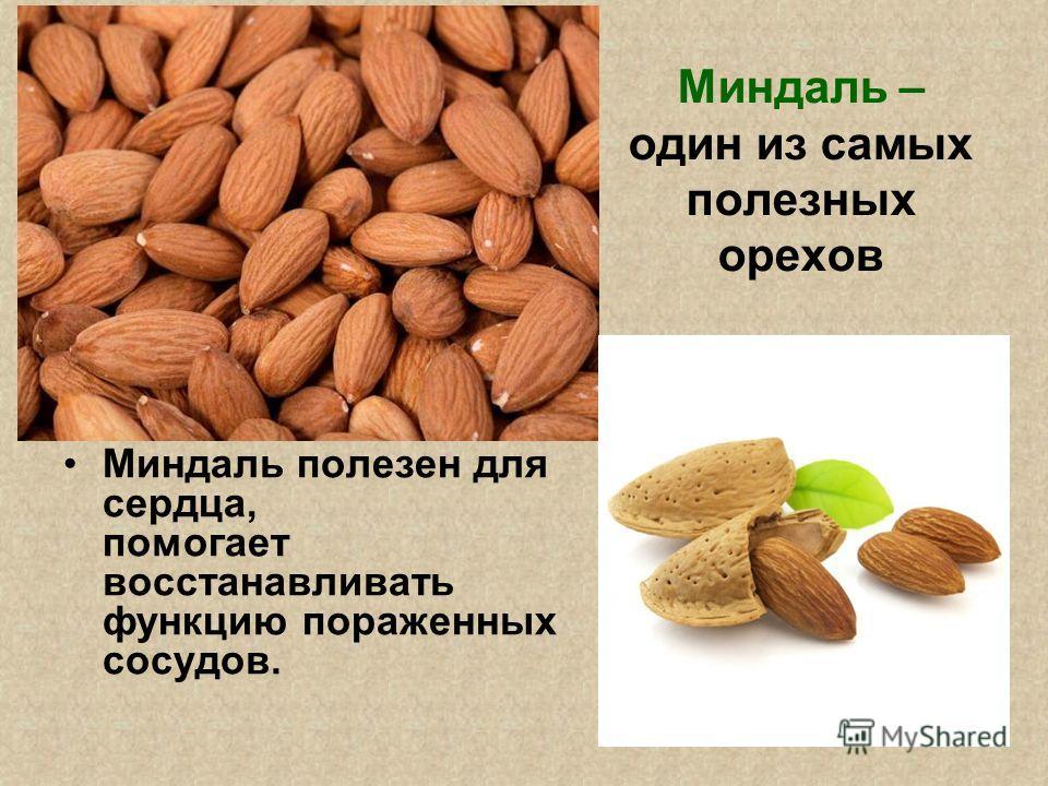 Миндаль – один из самых полезных орехов Миндаль полезен для сердца, помогает восстанавливать функцию пораженных сосудов.