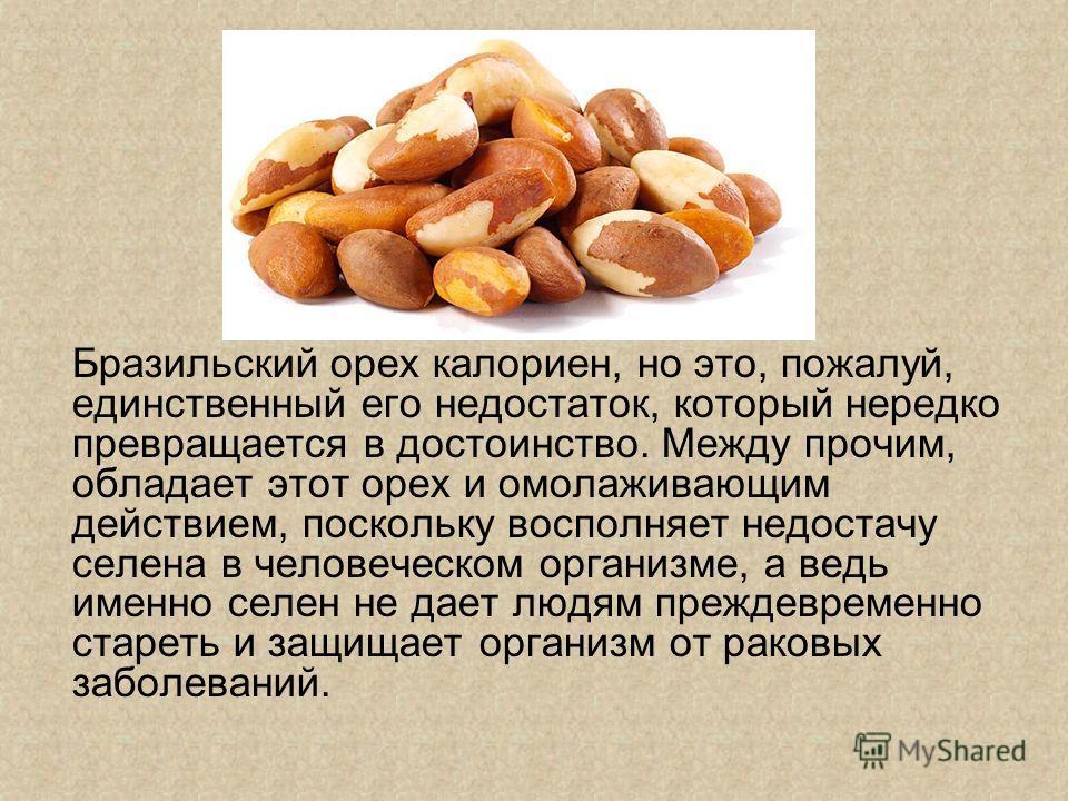 Бразильский орех калориен, но это, пожалуй, единственный его недостаток, который нередко превращается в достоинство. Между прочим, обладает этот орех и омолаживающим действием, поскольку восполняет недостачу селена в человеческом организме, а ведь им