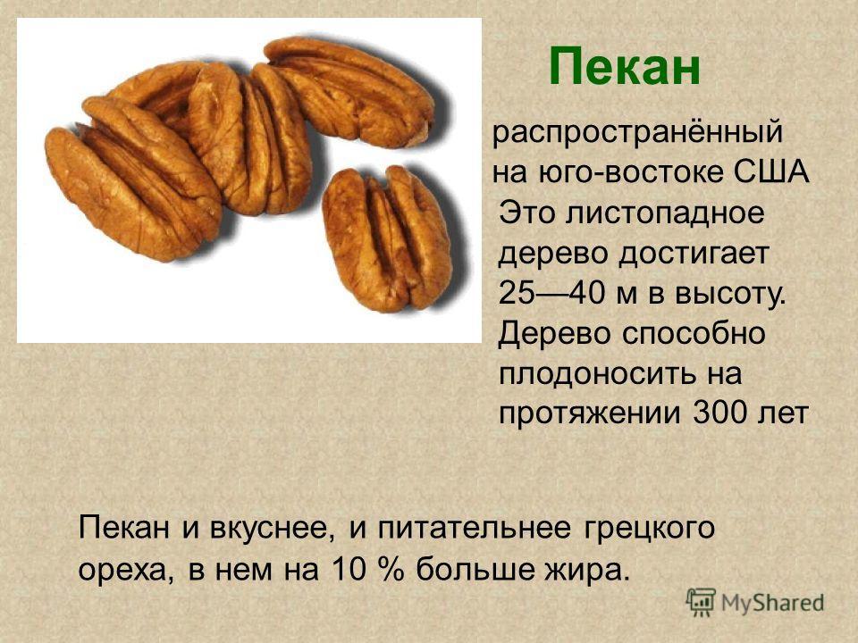 Пекан Пекан и вкуснее, и питательнее грецкого ореха, в нем на 10 % больше жира. распространённый на юго-востоке США Это листопадное дерево достигает 2540 м в высоту. Дерево способно плодоносить на протяжении 300 лет