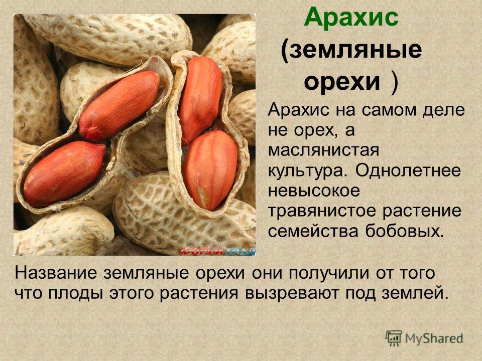 Арахис (земляные орехи ) Арахис на самом деле не орех, а маслянистая культура. Однолетнее невысокое травянистое растение семейства бобовых. Название земляные орехи они получили от того что плоды этого растения вызревают под землей.