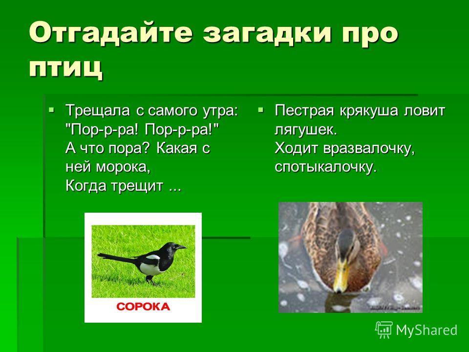Отгадайте загадки про птиц Трещала с самого утра: