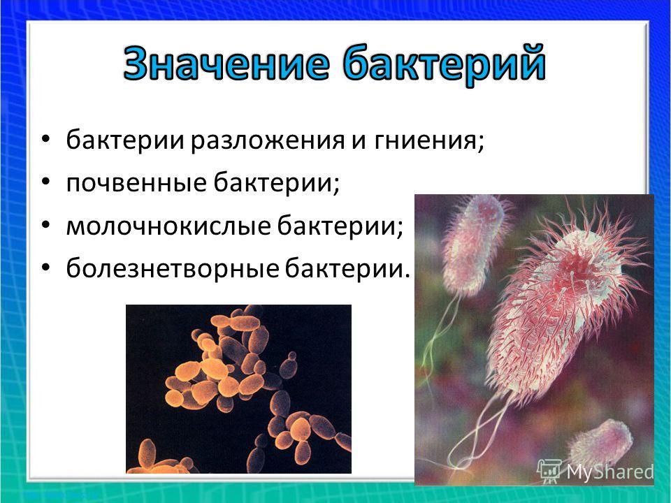 бактерии разложения и гниения; почвенные бактерии; молочнокислые бактерии; болезнетворные бактерии.