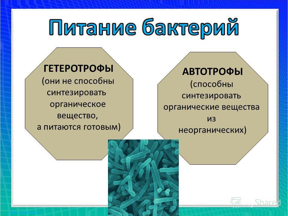ГЕТЕРОТРОФЫ (они не способны синтезировать органическое вещество, а питаются готовым) АВТОТРОФЫ (способны синтезировать органические вещества из неорганических)