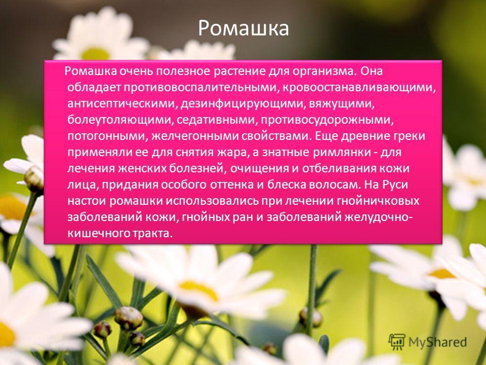 Ромашка Ромашка очень полезное растение для организма. Она обладает противовоспалительными, кровоостанавливающими, антисептическими, дезинфицирующими, вяжущими, болеутоляющими, седативными, противосудорожными, потогонными, желчегонными свойствами. Ещ
