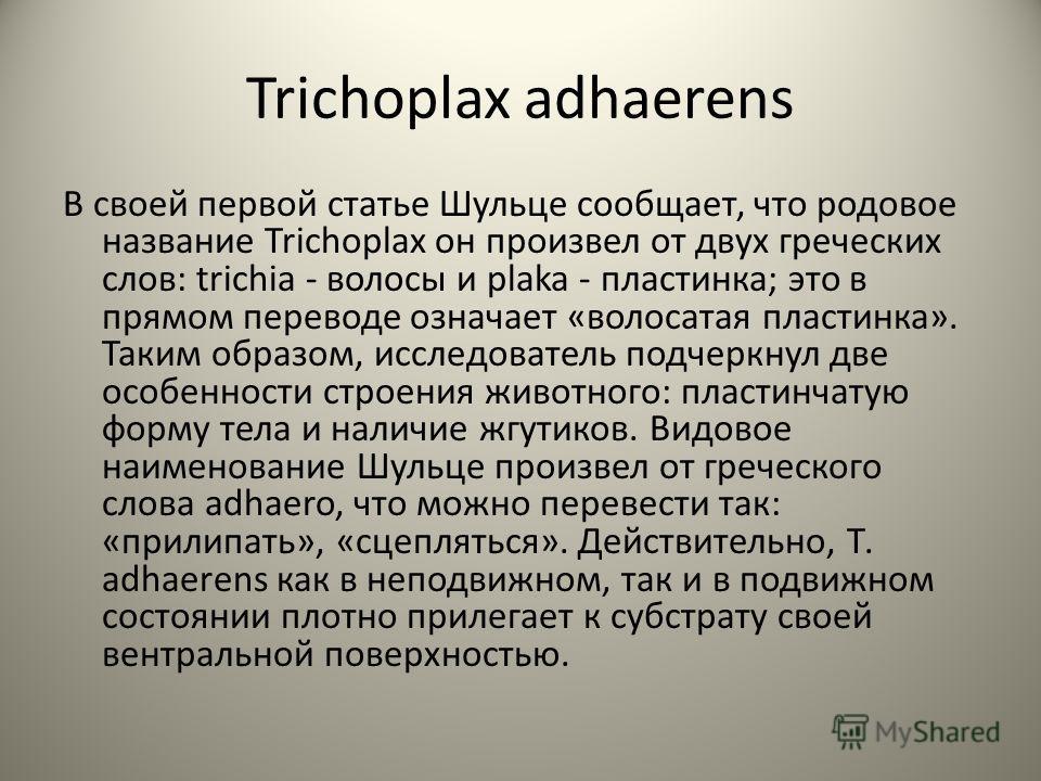 Trichoplax adhaerens В своей первой статье Шульце сообщает, что родовое название Trichoplax он произвел от двух греческих слов: trichia - волосы и plaka - пластинка; это в прямом переводе означает «волосатая пластинка». Таким образом, исследователь п